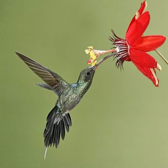 colorful-hummingbirds- (38)
