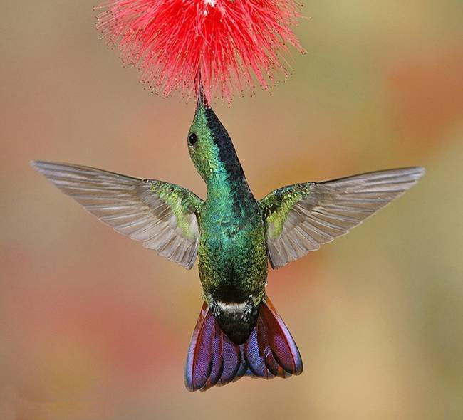 colorful-hummingbirds- (5)