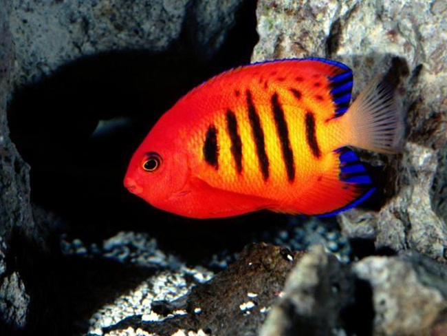 colorful-tropical-fishes- (4)