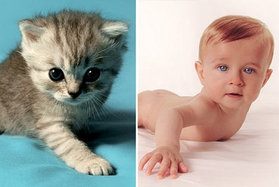 cute-babies-poses-alike-animals-babies- (3)