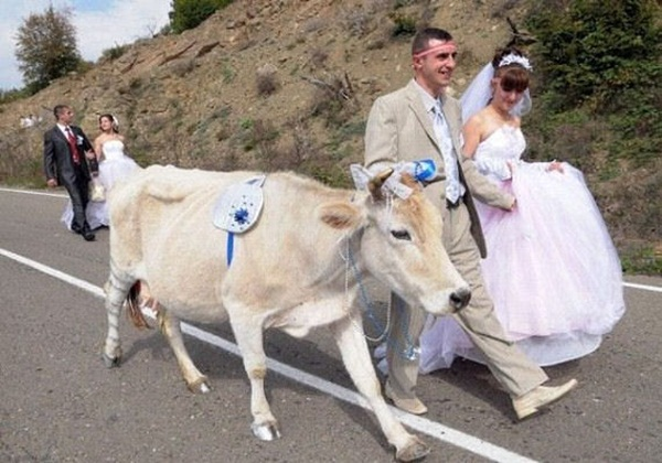 funny-wedding-photos- (22)