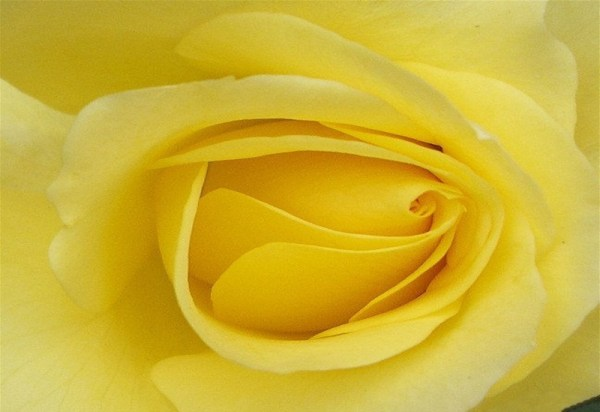 life-in-yellow-color- (32)