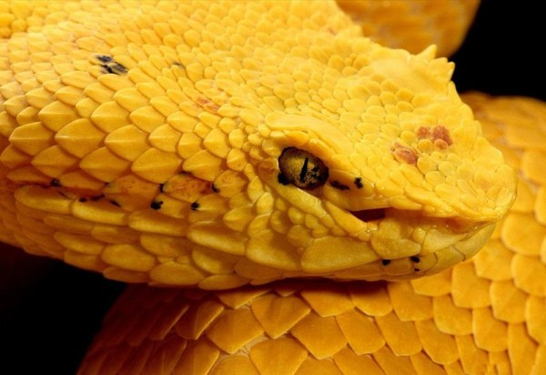 life-in-yellow-color- (33)