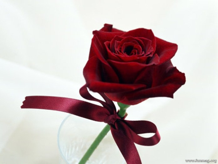 romantic-red-roses-pictures- (16)