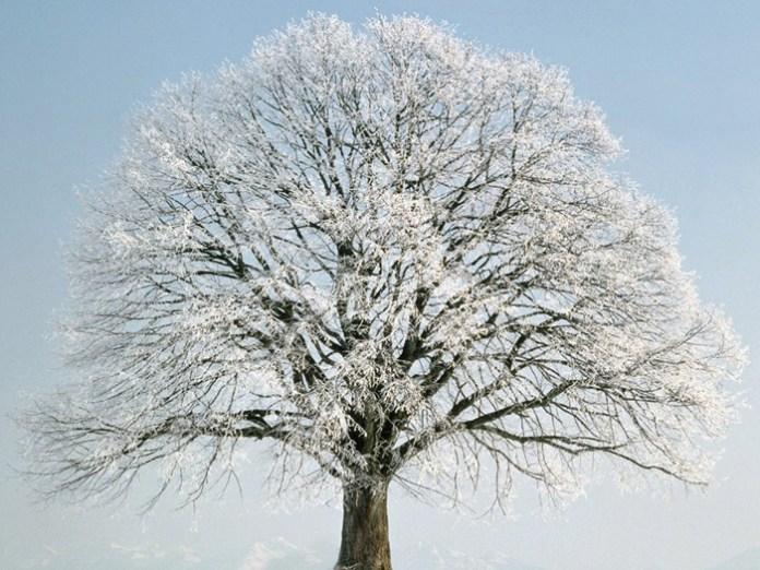 beautiful-winter-scenery- (18)