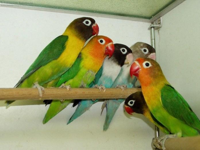 colorful-parrots-26-photos- (2)