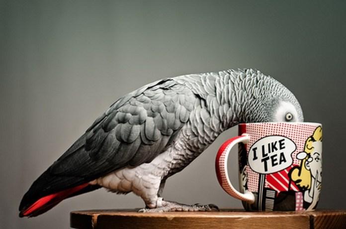 colorful-parrots-26-photos- (6)
