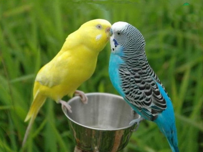 colorful-parrots-26-photos- (8)