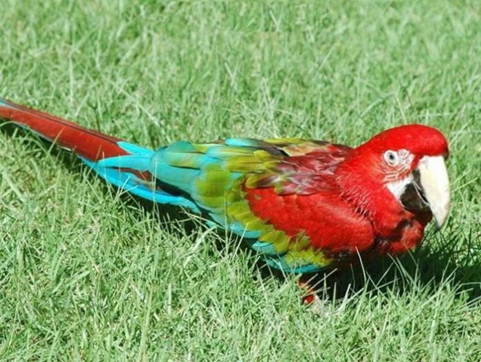 colorful-parrots-26-photos- (10)