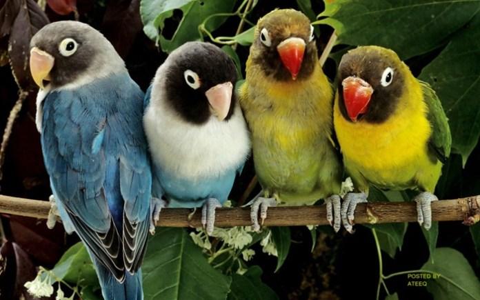 colorful-parrots-26-photos- (11)