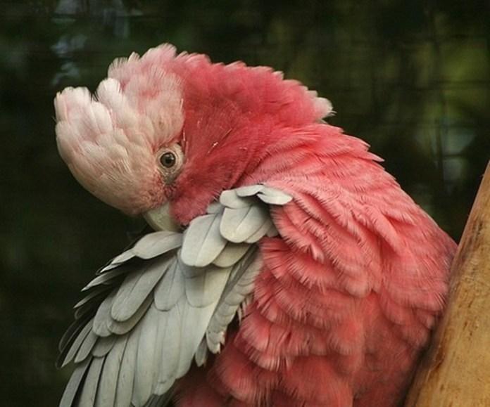 colorful-parrots-26-photos- (15)
