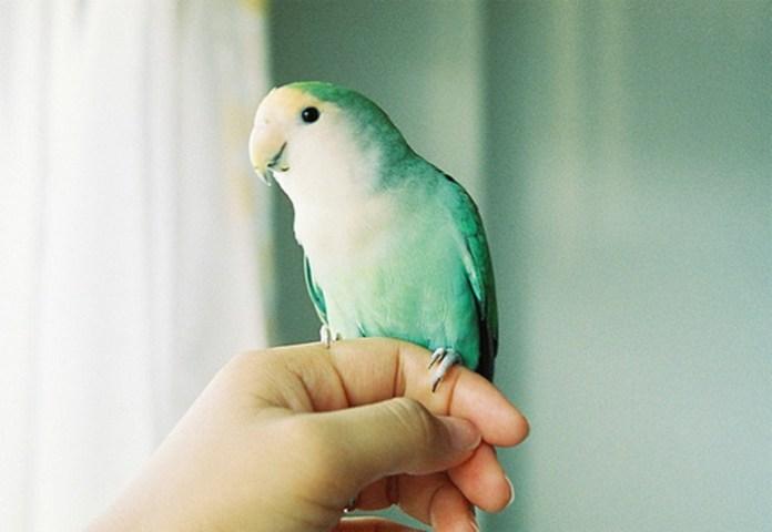 colorful-parrots-26-photos- (16)