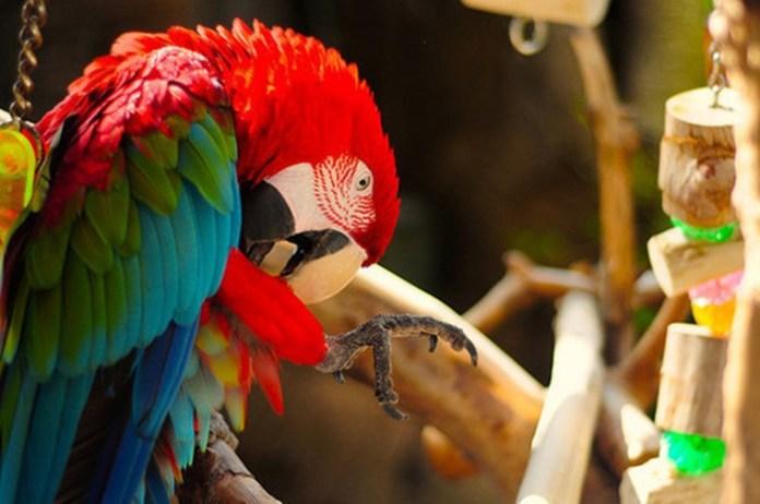 colorful-parrots-26-photos- (20)