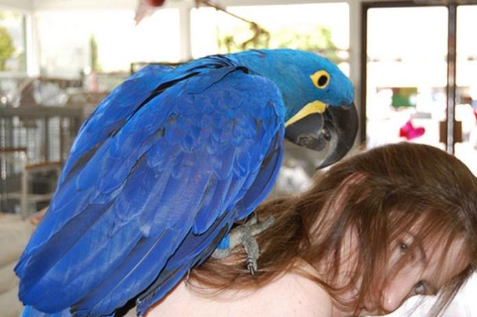 colorful-parrots-26-photos- (23)