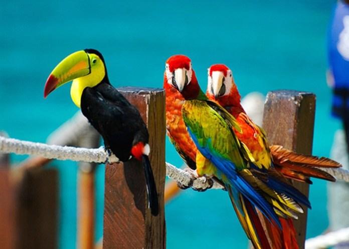 colorful-parrots-26-photos- (25)