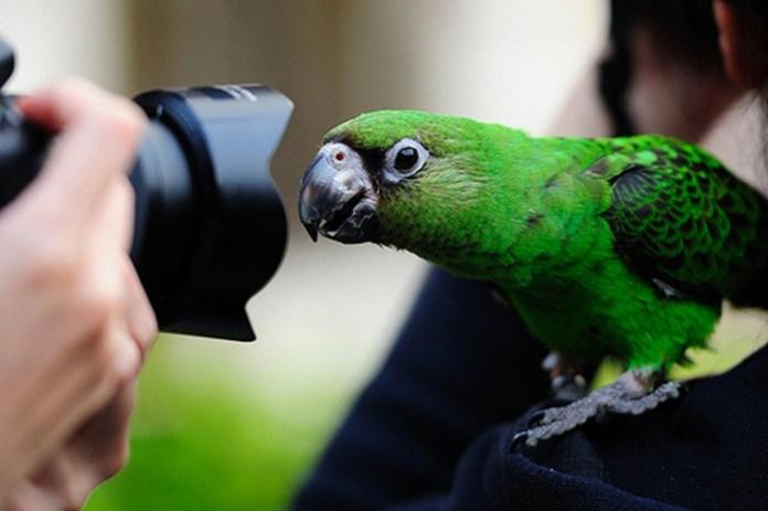 colorful-parrots-26-photos- (26)