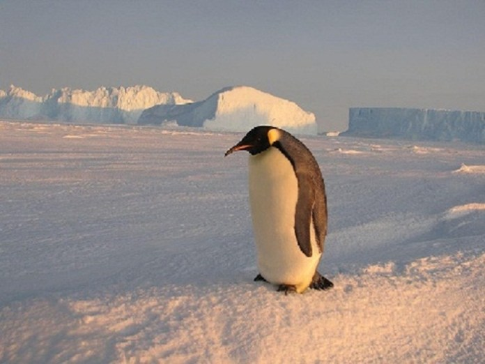cute-penguin-photos- (4)