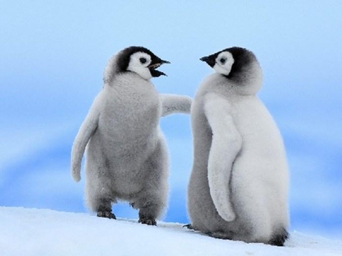 cute-penguin-photos- (7)