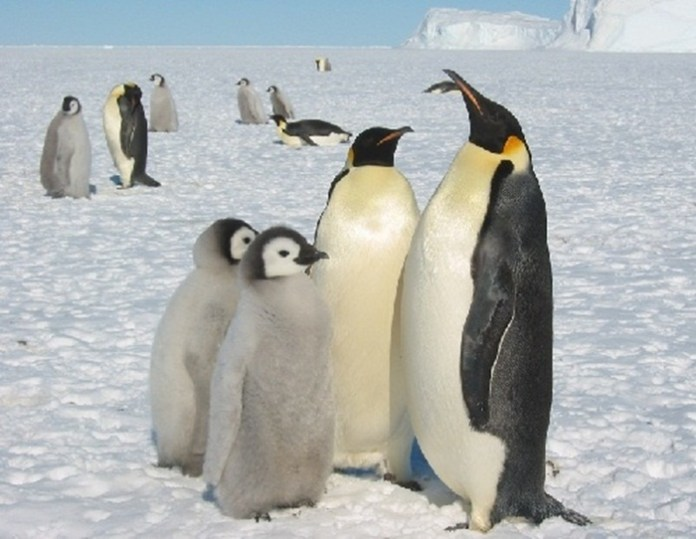 cute-penguin-photos- (8)