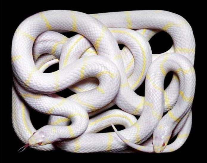 colorful-snakes-16-photos- (10)