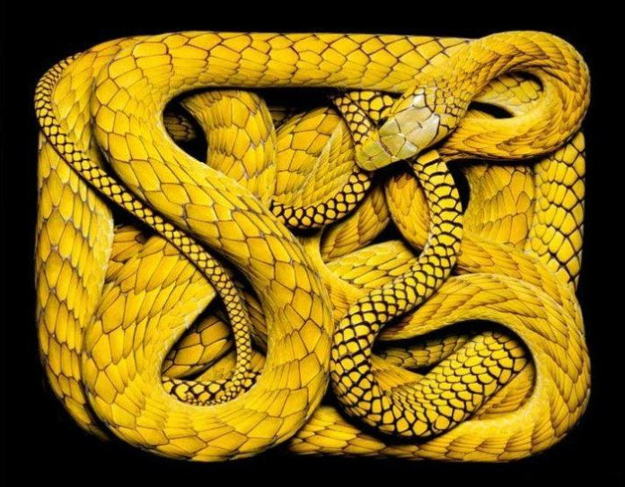 colorful-snakes-16-photos- (2)