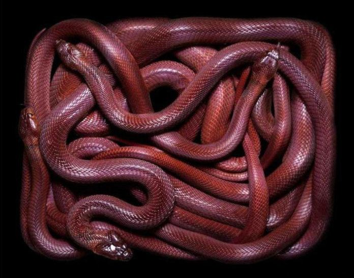 colorful-snakes-16-photos- (3)