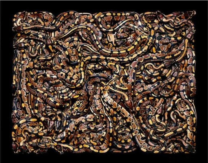 colorful-snakes-16-photos- (5)