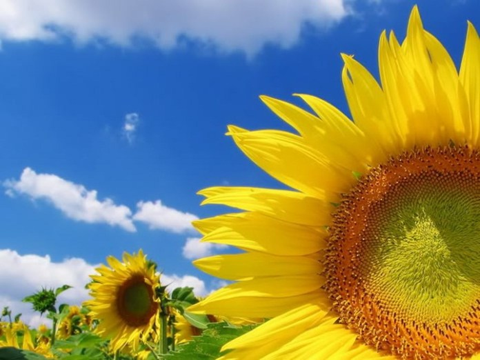 flower-with-sky- (1)