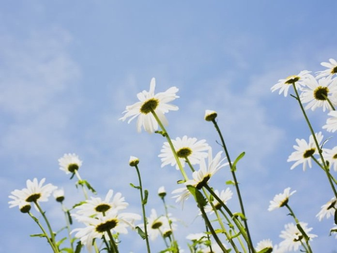 flower-with-sky- (9)