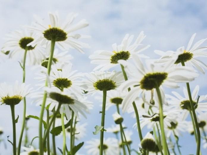 flower-with-sky- (10)
