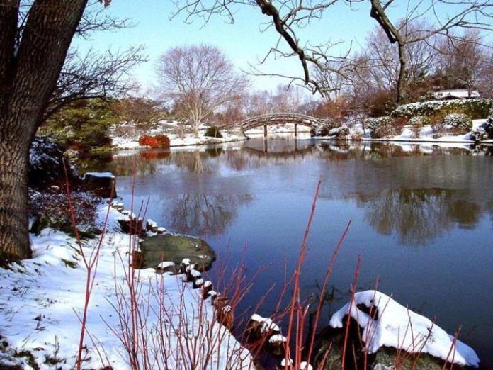 snow-in-autumn- (2)