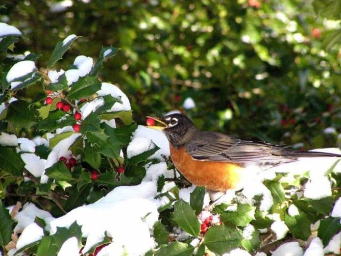 snow-in-autumn- (3)