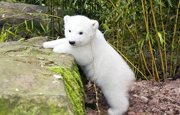 adorable-baby-animals- (8)