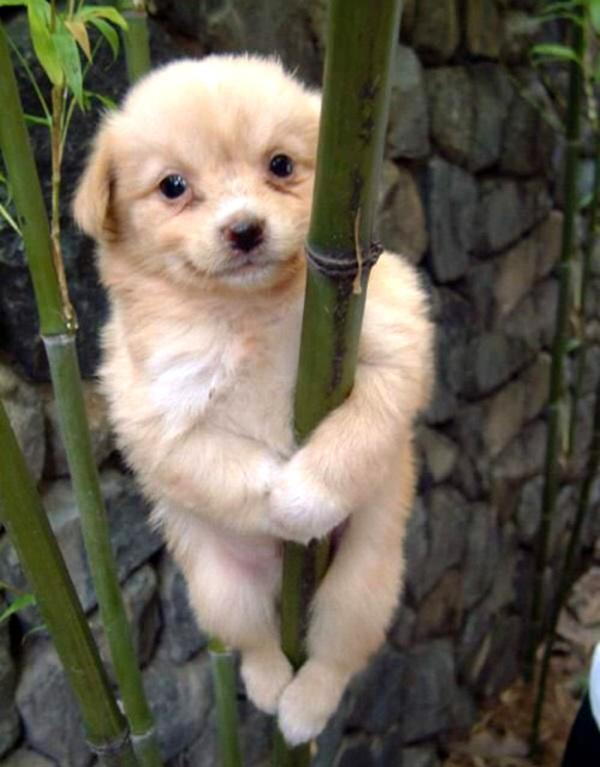 adorable-baby-animals- (9)