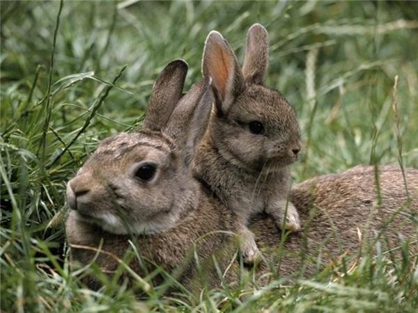 adorable-baby-animals- (14)