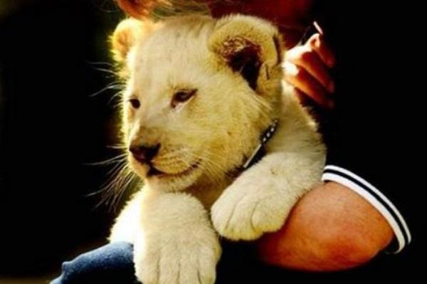 adorable-baby-animals- (17)