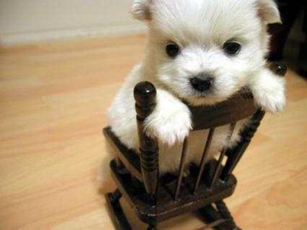 adorable-baby-animals- (24)