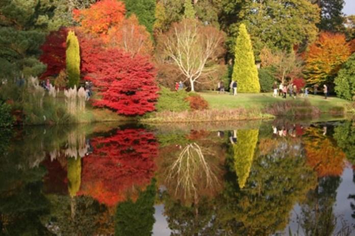 beauty-of-autumn- (1)