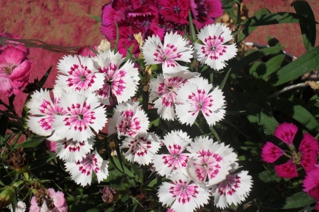 colorful-spring-flowers- (10)