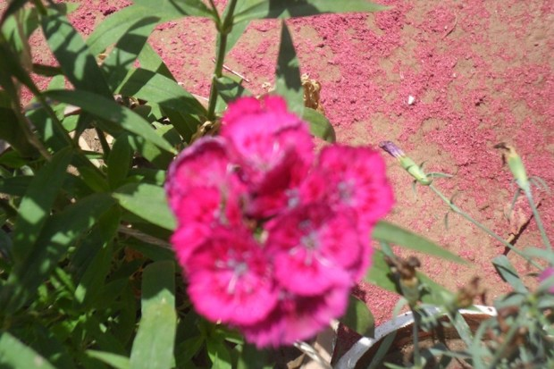 colorful-spring-flowers- (11)