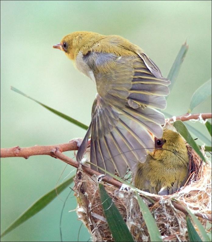 cute-baby-birds- (3)