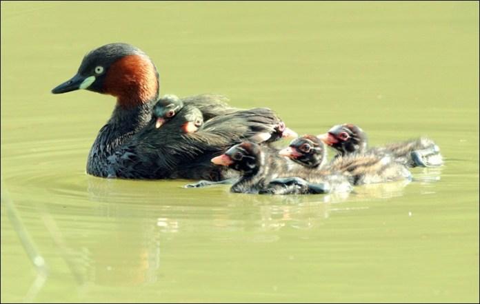 cute-baby-birds- (11)