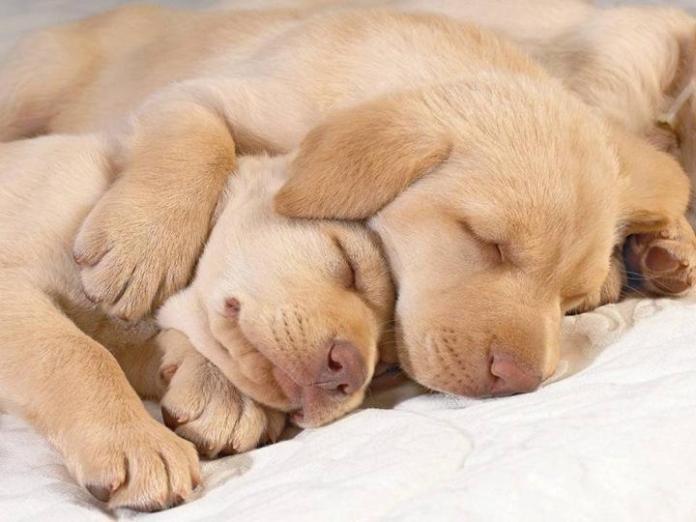 cute-dogs-photos- (11)