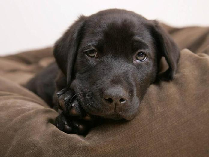 cute-dogs-photos- (12)