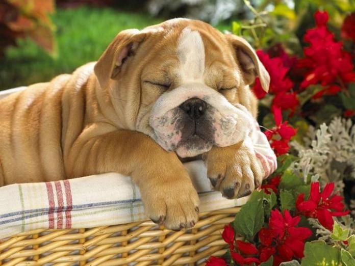 cute-dogs-photos- (15)