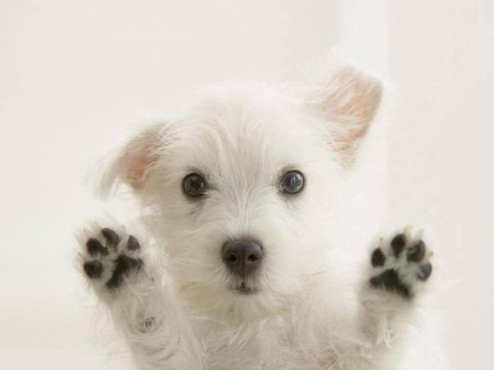 cute-dogs-photos- (25)
