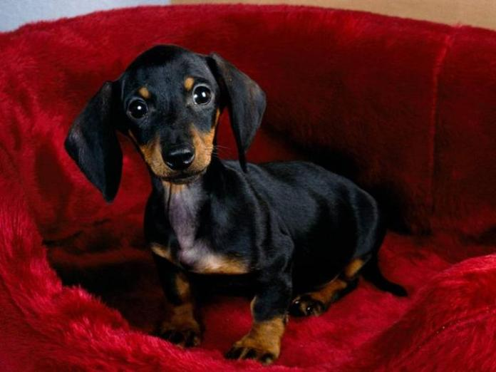 cute-dogs-photos- (28)
