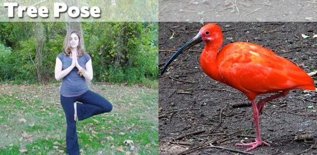 yoga-and-animals- (12)