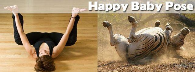 yoga-and-animals- (14)
