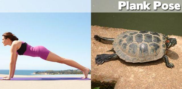 yoga-and-animals- (22)